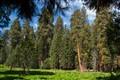 The Big Trees Trail