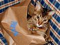 Playful Dexter