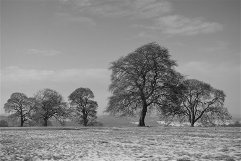 Frosty Tree Landscape mono_edited-1