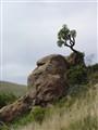 Baboon stone