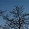 2012-02-21_16-53-07 • NEX-5N + Tele-Elmar 135mm f4 - Doves in Tree_00