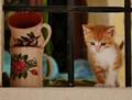 kitten in a shop window