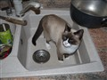 The cat in on the... SINK!