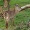 Zoo29514 (4)