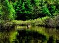 Mckinney Creek