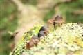 wild muchrooms