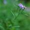 Wild_flower_02