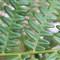 fern fronds