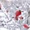 red & whitek01