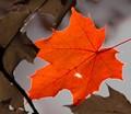 121020 Pinhole leaf