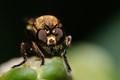 Flies spread disease, so keep yours closed!