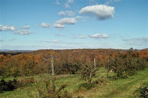 Wilkens farm
