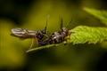 ants love
