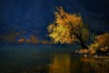 Autumn tree