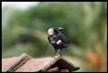 Crow_1302