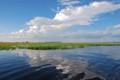 The Chobe