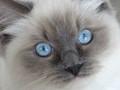Wondering eyes