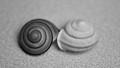 2 Spiral Snail Shells