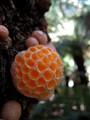 Strange 'Honeycomb' Fungus