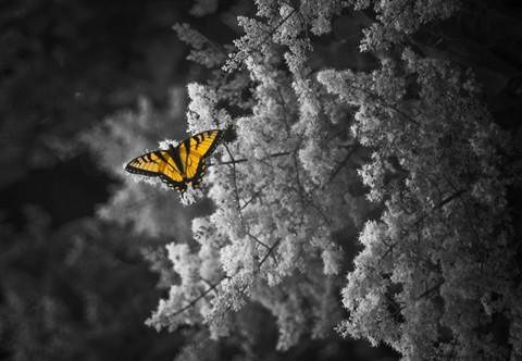 monarch2222