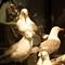 Sea Birds, Bird Museum, Iceland