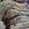 Grand Cayon Tree