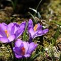 Spring has Sprung - Finally