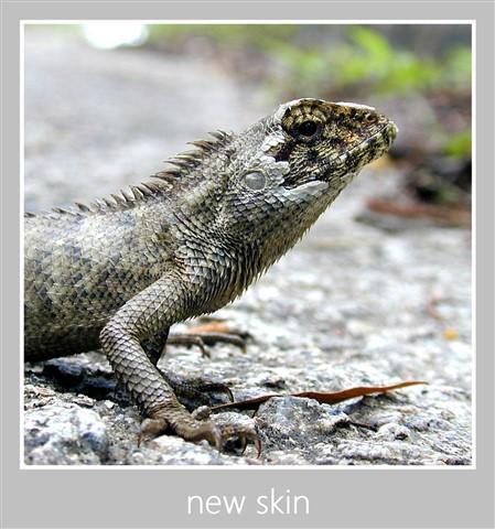 New Skin cropped b1