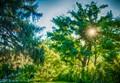Sun Through Trees (1 of 1)