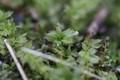 Moss on Ground