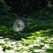 Web, Kew Gardens
