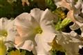 Night Flowers 2