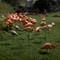 Lumix S Pro 501.4_flamingo-1