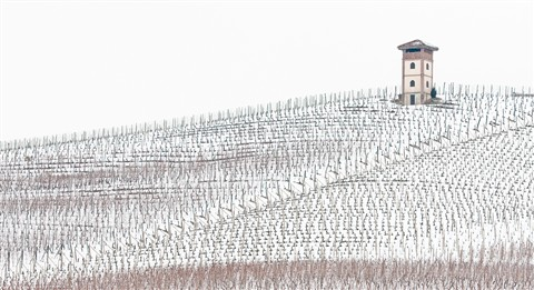 vineyard in winter dress