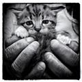 A handful.