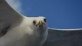 Soaring seagull taken in Istanbul