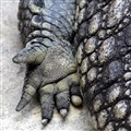 Croco Hand - Relaxing