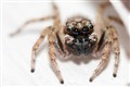 Posing Spider