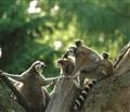 zoo warsaw