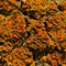 Lichens on a Tree Bark
