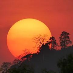 sunset~tree~ridge...