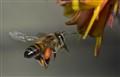Pollen Search