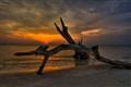 Driftwood Beach HDR 5