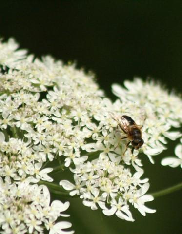 blflower
