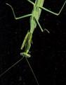 Mantis on my window