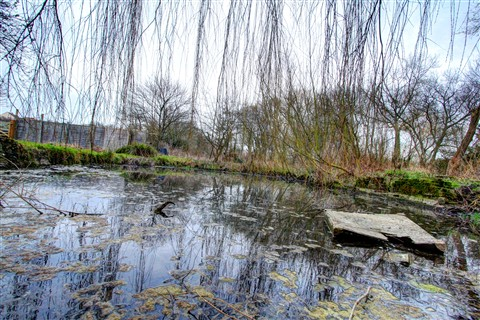 Pond HDR Part 3