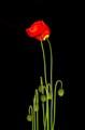 Flower-7973