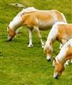 Three Horses 2