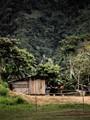 Jungle in Choco, Colombia