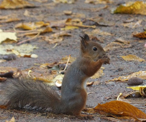 Squirrel_50pct